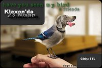 dogs can be birds